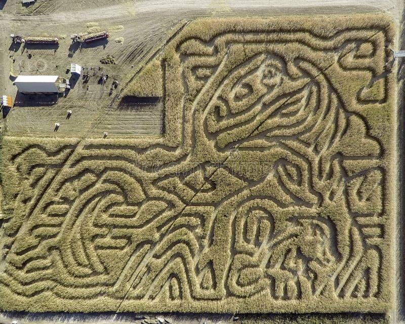 Labirinto do milho de Idaho com fugas e testes padrões imagem de stock royalty free