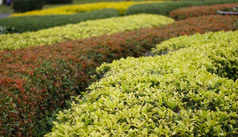 Labirinto tradizionale verde con la capanna Giardino decorativo in forma fotografie stock libere da diritti