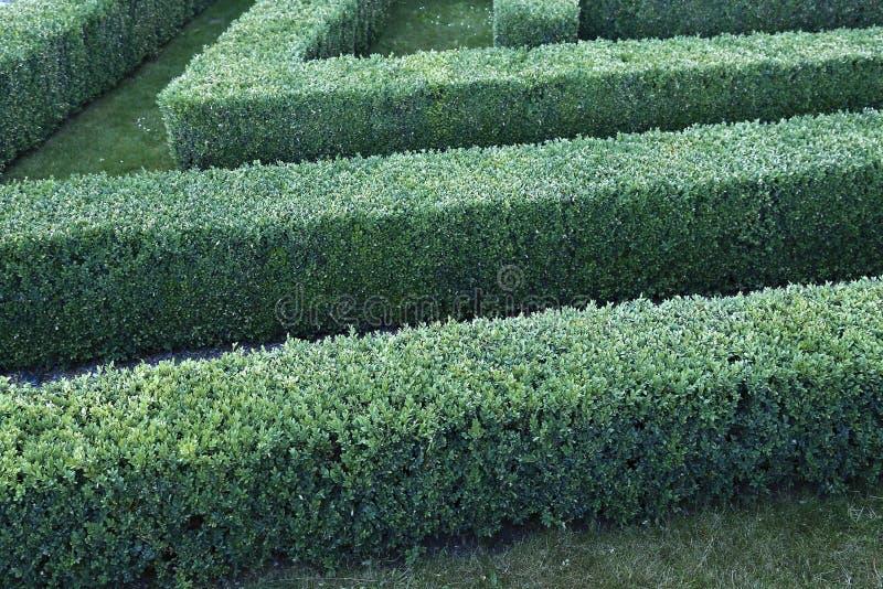Labirinto verde de arbustos aparados do buxo imagem de stock royalty free