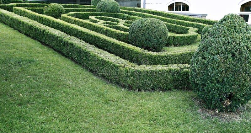 Labirinto verde de arbustos aparados do buxo fotografia de stock royalty free