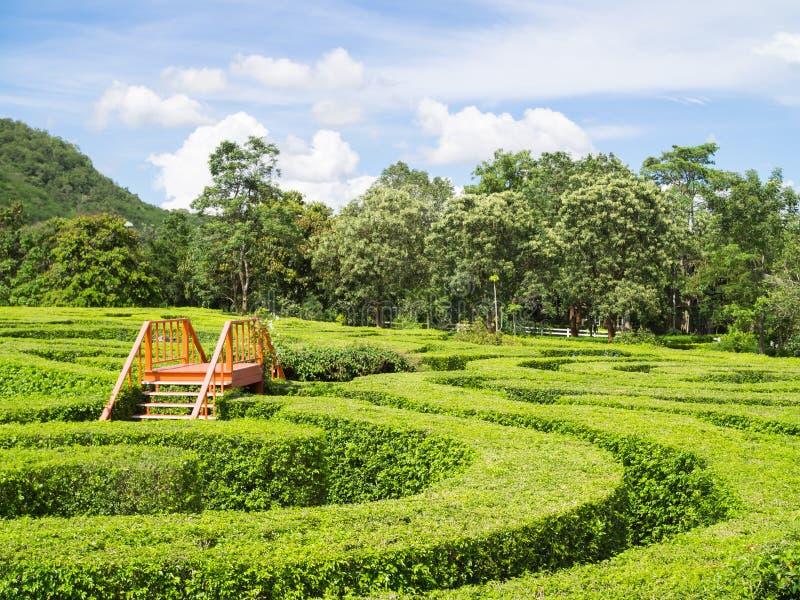 Labiryntu ogród obraz royalty free