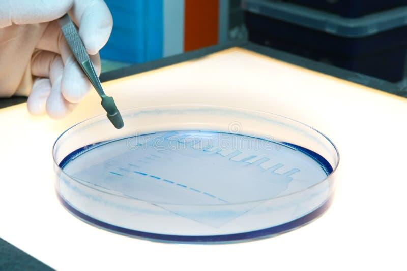 Labor-DNA-Forschungsprüfung stockbild