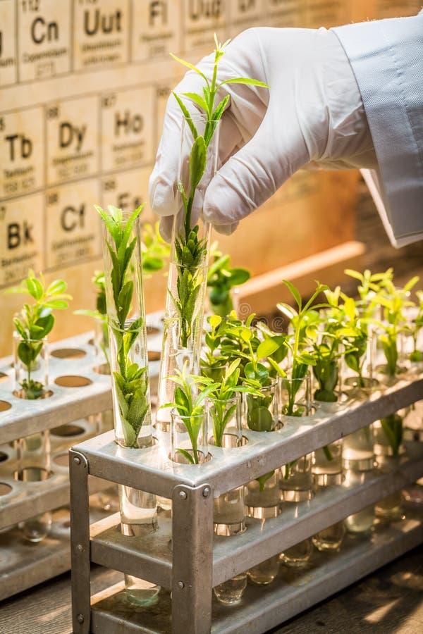 Labor, welches die neuen Methoden der Grünpflanze heilend erforscht stockbild