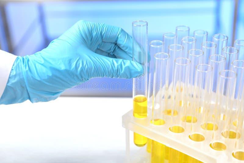 Laborancki asystent bierze próbnej tubki z próbką moczu dla analizy od właściciela na stole fotografia stock