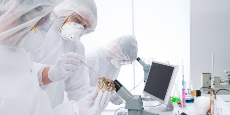Laborancki chemiczny eksperyment fotografia royalty free