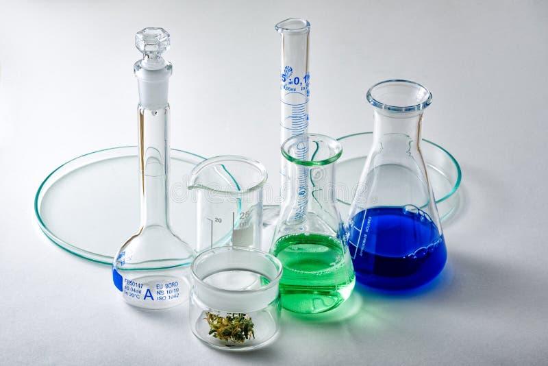 Laborancki Glassware z marihuana pączkiem w Małym Szklanym zbiorniku zdjęcie royalty free