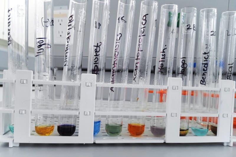 Laborancki test dla determinaci węglowodany i proteiny obrazy royalty free