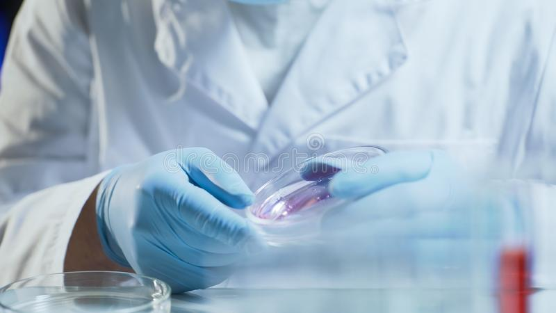 Laboranckiego pracownika dyrygentury badania probiercza konsystencja biologiczny materiał zdjęcia stock