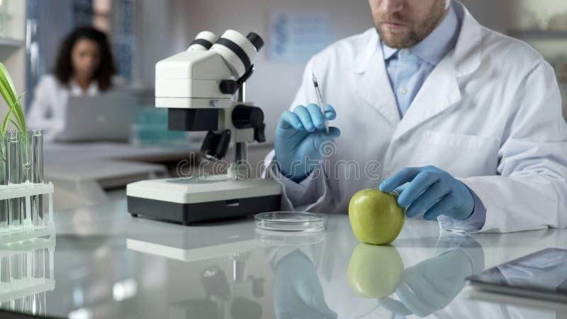 Laborant, der Spritze mit chemischer Flüssigkeit für Einspritzung im Apfel hält stockfotografie