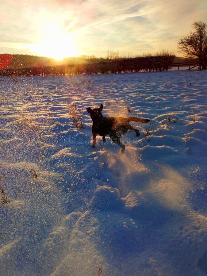 Laboratório da neve fotografia de stock