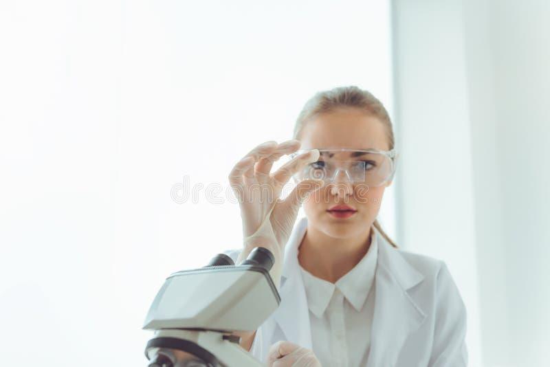 Laboratório de pesquisa do cientista em vidros seguros usando o microscópio para analisar as anti bactérias através do vidro de c fotos de stock royalty free