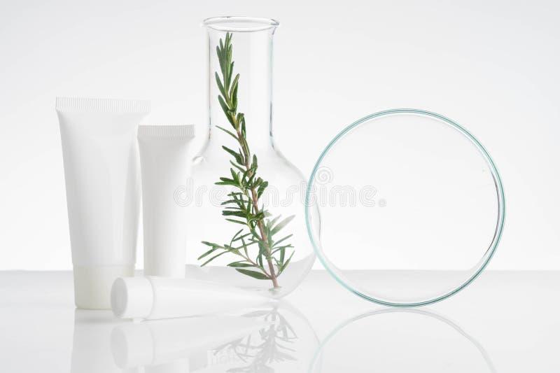 laboratório e pesquisa com medicina alternativa da erva imagem de stock royalty free