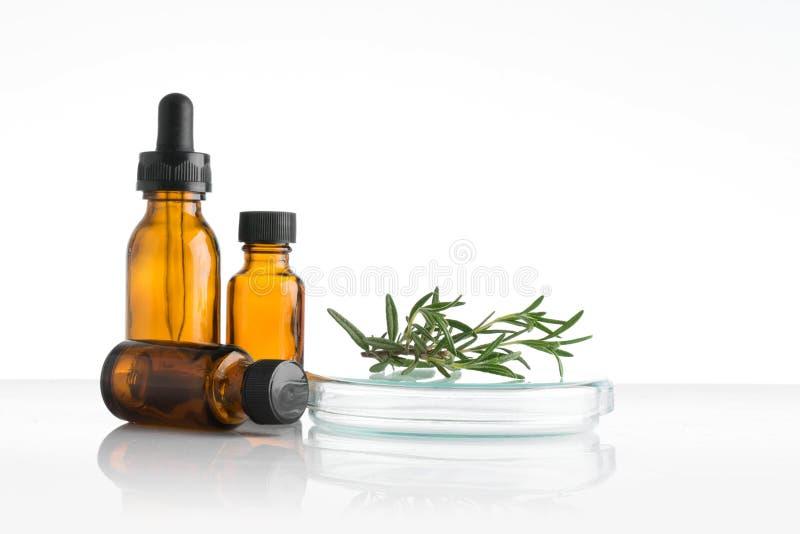 laboratório e pesquisa com medicina alternativa da erva imagens de stock royalty free