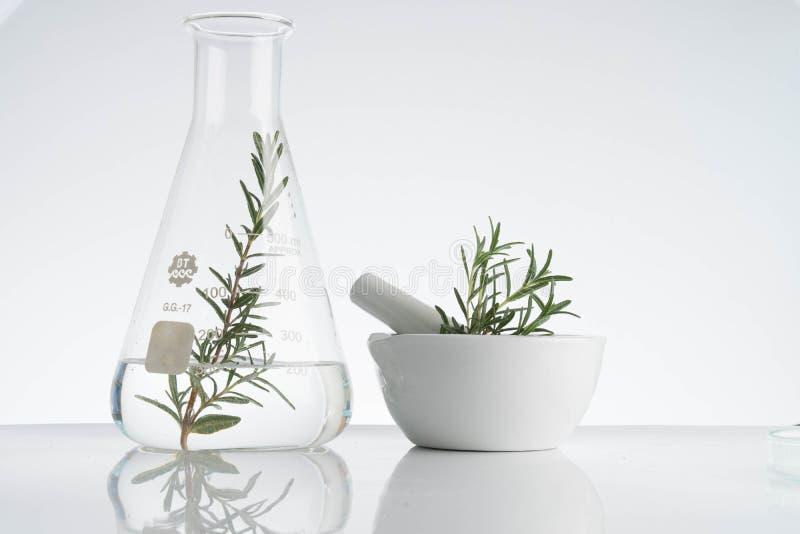 laboratório e pesquisa com medicina alternativa da erva fotos de stock