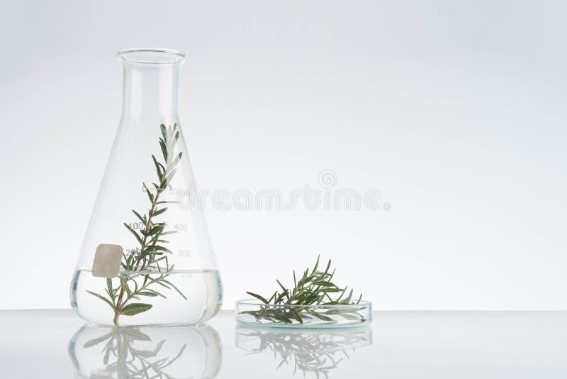 laboratório e pesquisa com medicina alternativa da erva foto de stock