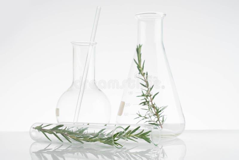 laboratório e pesquisa com medicina alternativa da erva imagens de stock