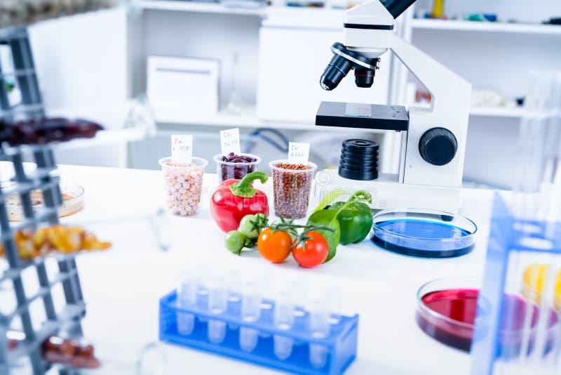 Laboratório químico da cadeia alimentar O alimento no laboratório, ADN altera GMO alterou Genetically o alimento no laboratório foto de stock