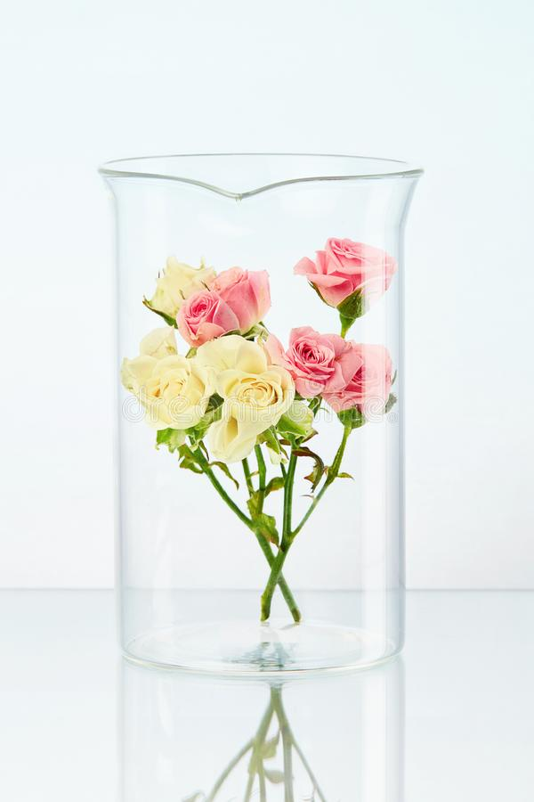 Laboratório Vidro transparente com flor fotografia de stock