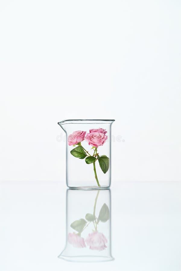 Laboratório Vidro transparente com flor fotos de stock