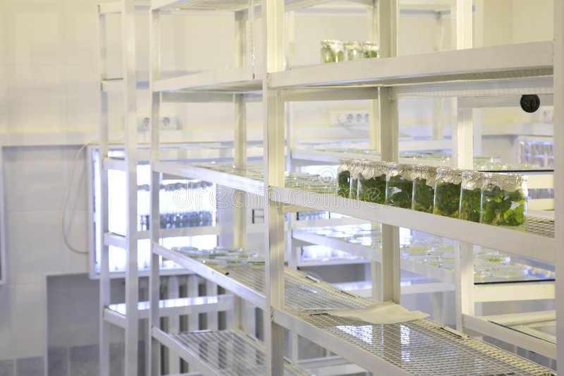 Laboratoire biologique photo stock