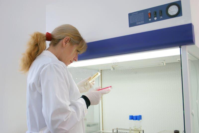 laboratoria zdjęcie stock