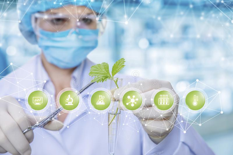 A laboratorian is keeping a sprout in a lab tube and obtaining samples with medical clamp at symbols foreground stock images