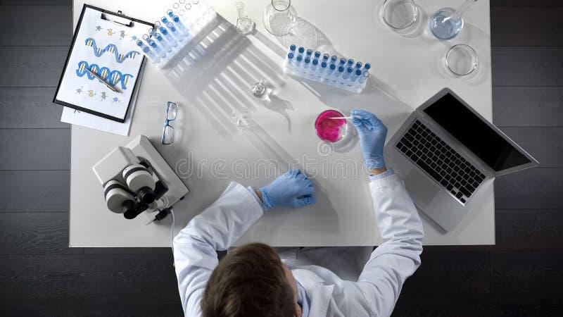 Laboratorian que combina dois agentes químicos no prato, opinião superior da pesquisa científica imagens de stock