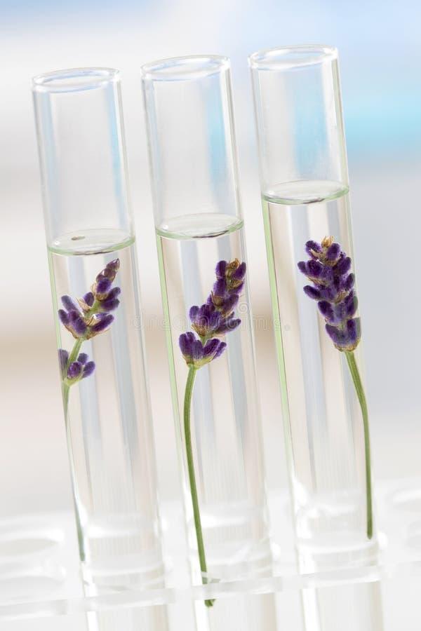 Laboratorio di cosmetologia - fiori e piante in provette fotografia stock