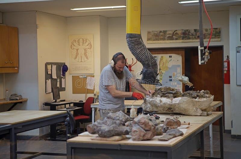 Laboratorio en el museo de la paleontología Egidio Feruglio en la ciudad de Trelew, Patagonia, la Argentina fotos de archivo libres de regalías
