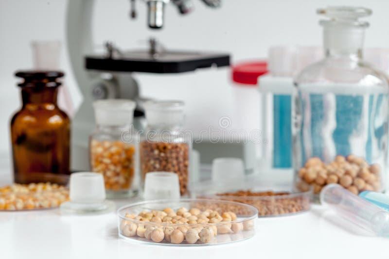 Laboratorio para la prueba del garbanzo del análisis de alimentos nadie foto de archivo libre de regalías