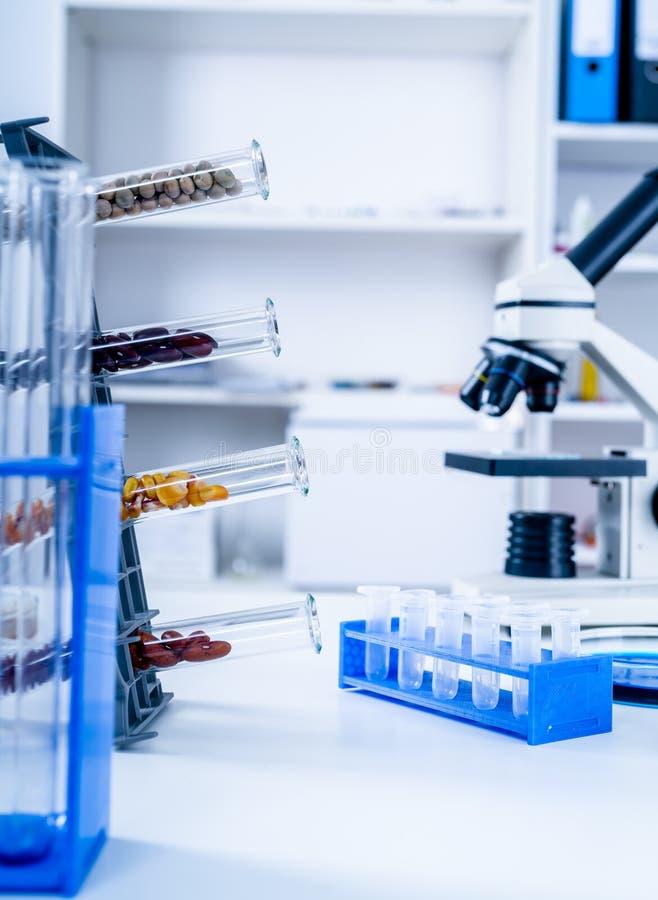 Laboratorio químico del suministro de alimentos La comida en el laboratorio, DNA se modifica GMO genético modificó la comida en l fotos de archivo