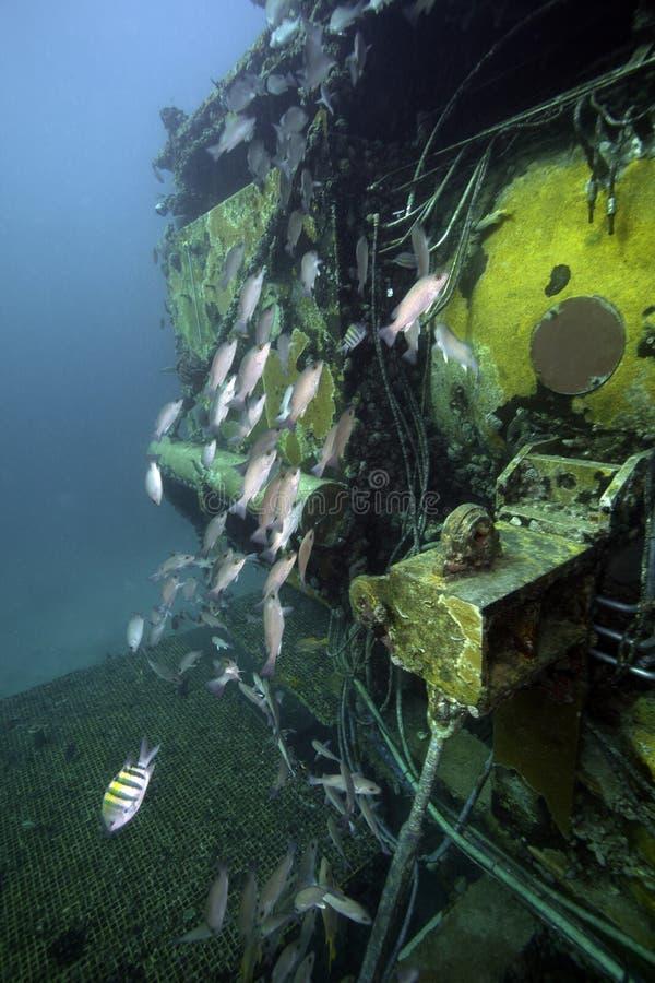 Laboratorio subacuático del acuario - Largo dominante la Florida fotos de archivo libres de regalías