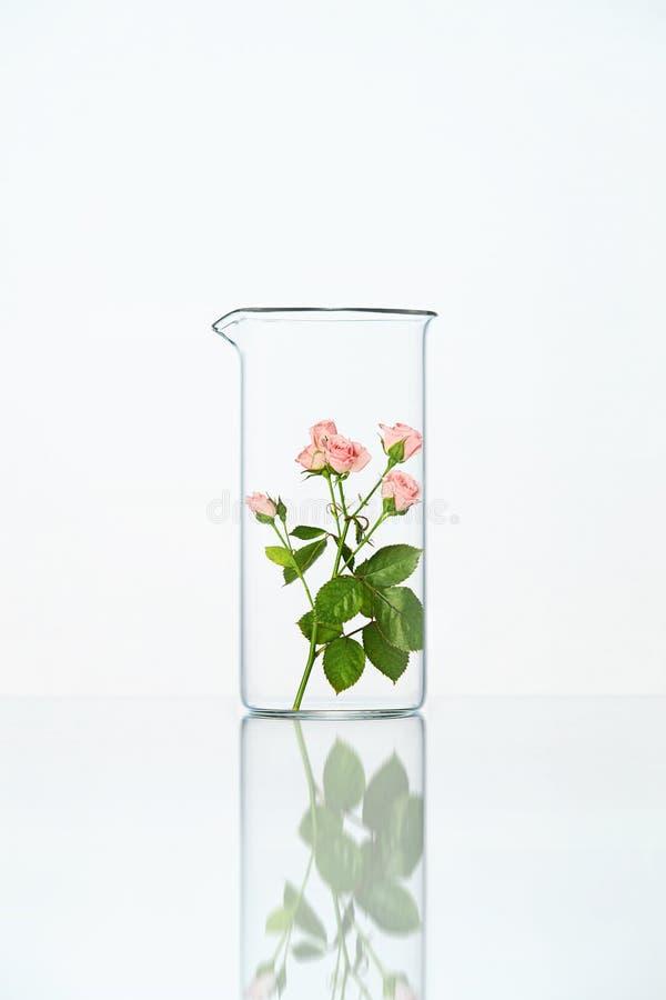 Laboratorio Vetro trasparente con il fiore fotografia stock libera da diritti