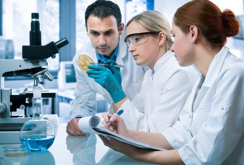 laboratorium royaltyfri bild