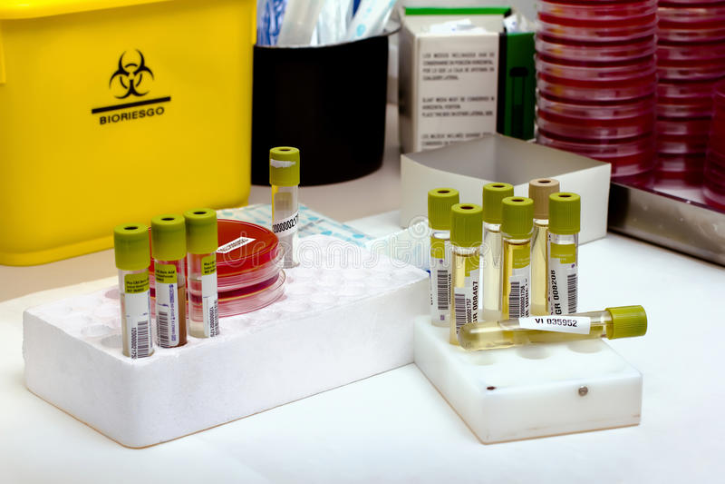 laboratorium matrycuje tubki workbench obrazy stock