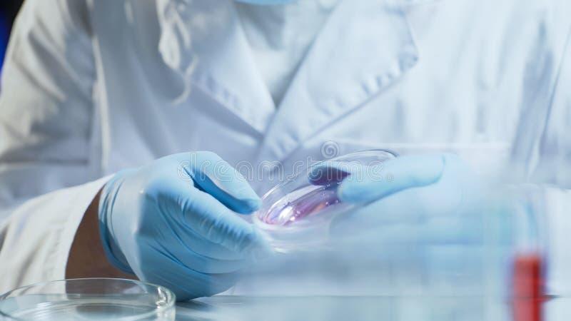 Laboratoriumarbeider die onderzoek testende consistentie van biologisch materiaal leiden stock foto's