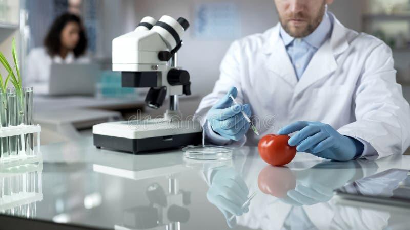 Laboratoriumarbeider die pesticideinenting maken aan tomaten om bederf te verhinderen royalty-vrije stock afbeelding