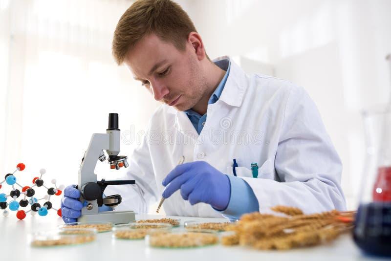 Laboratoriumdeskundige die GMO-testexperimenten doen bij laboratorium stock foto