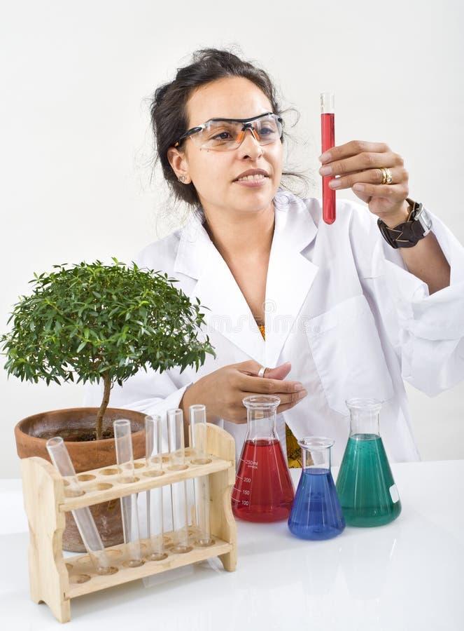laboratoriumväxtforskare royaltyfri foto