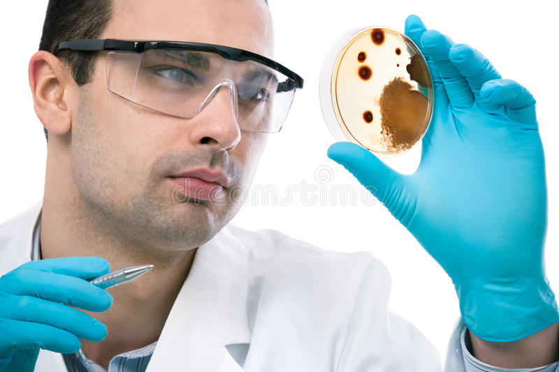 Laboratory. Scientist observing petri dish at the laboratory royalty free stock image