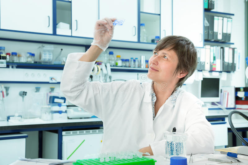 Laboratory assistant. Exploring cellular tissue sections. biopsy royalty free stock photography