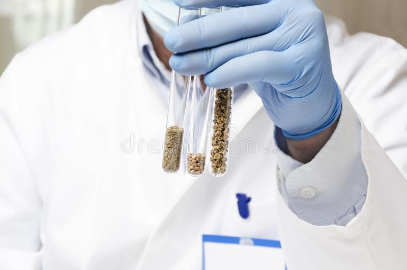 Laboratory assistant holding test tubes with different kinds of seed before experiments at the agro laboratory royalty free stock photo