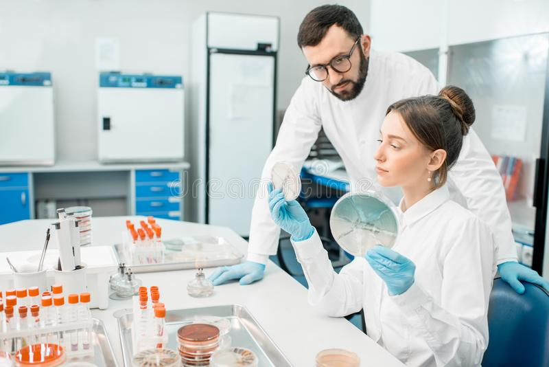 Laboratory assistants in the bacteriological department. Couple of medics in uniform looking on the effect of antibiotics on bacteria in Petri dishes making royalty free stock photos