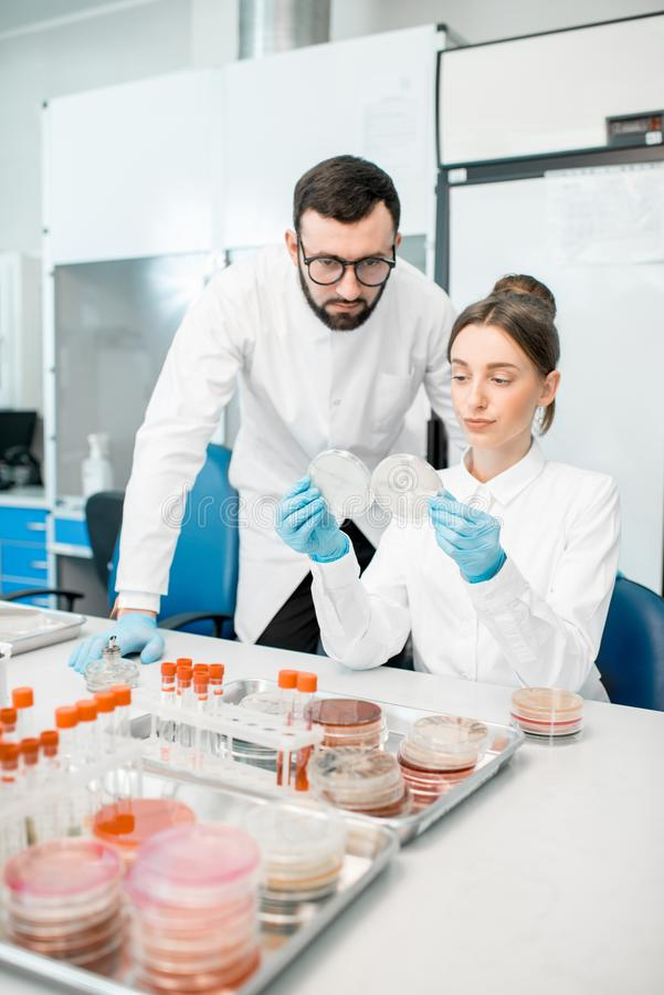 Laboratory assistants in the bacteriological department. Couple of medics in uniform looking on the effect of antibiotics on bacteria in Petri dishes making stock photography