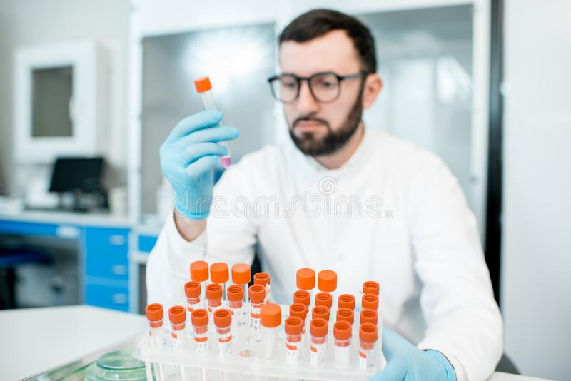 Laboratory assistants in the bacteriological department. Male laboratory assistant examining test tube in the bacteriological department of laboratory royalty free stock photo