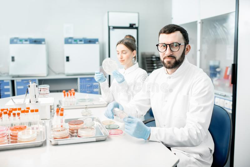 Laboratory assistants in the bacteriological department. Portrait of a man in medical uniform during the bacteriological tests sitting with assistant in the stock photography