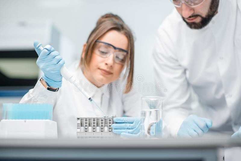 Laboratory assistants working in the medical laboratory. Laboratory assistants in uniform and protective glasses working with test tubes in the medical royalty free stock photos