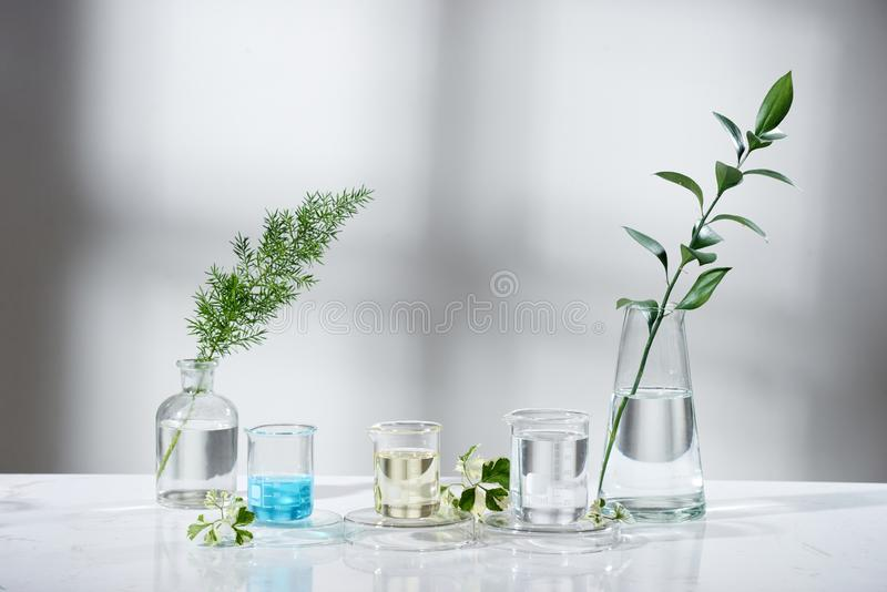 Laboratory experiment and research with leaf, oil and ingredient extract for natural beauty and organic skincare product the blank. Bottle for label ,bio stock photos