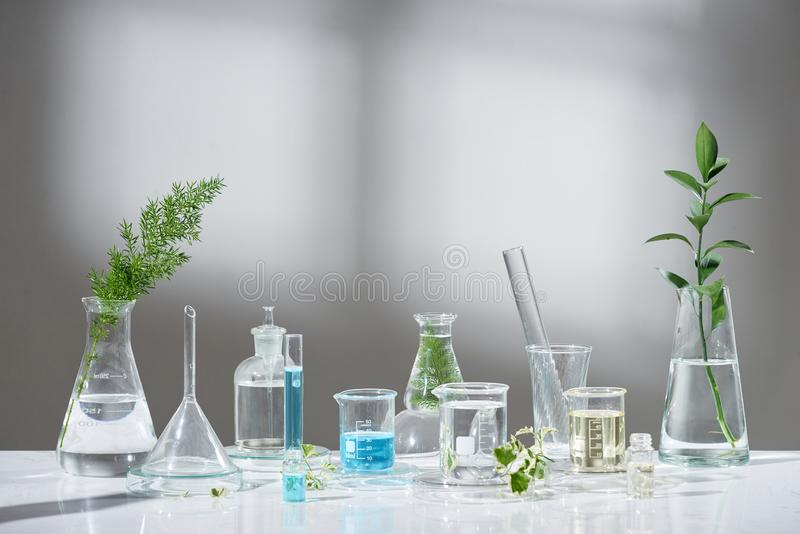 Laboratory experiment and research with leaf, oil and ingredient extract for natural beauty and organic skincare product the blank royalty free stock image