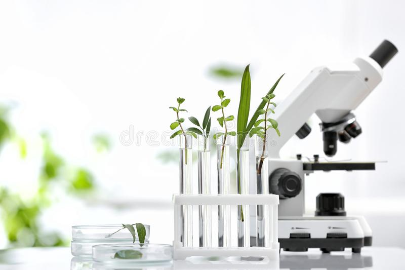 Laboratory glassware with different plants and microscope on table against blurred background, space for text. Chemistry research stock photos